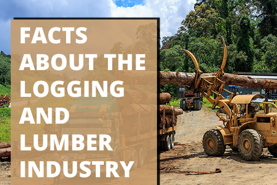 Facts About the Logging and Lumber Industry